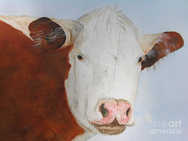 Painting - Hereford by Peggy Dickerson