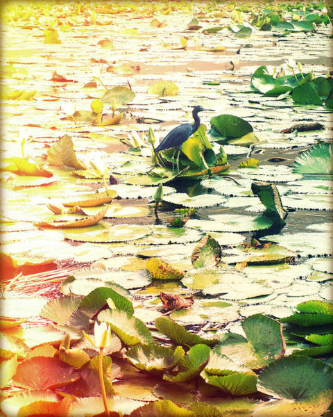 Lilly Pad Photograph - Heron Among Lillies Photography Light Leaks by Chris Andruskiewicz