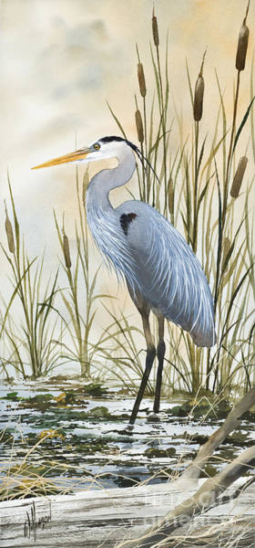 Great Blue Heron Wall Art - Painting - Heron And Cattails by James Williamson