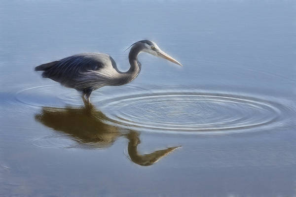 Photograph - Heron And Ripples by Wes and Dotty Weber