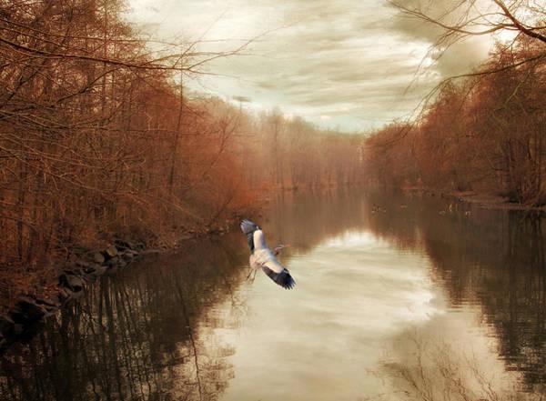 Photograph - Heron Ascending   by Jessica Jenney
