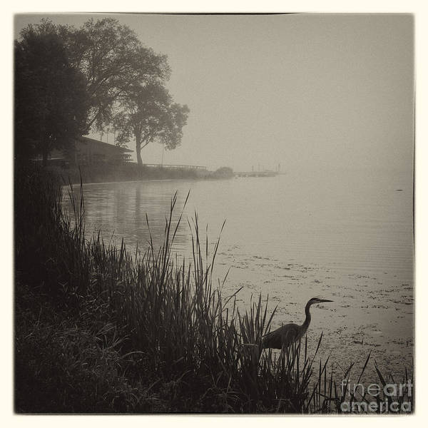 Photograph - Heron At East Lake Winona Square by Kari Yearous