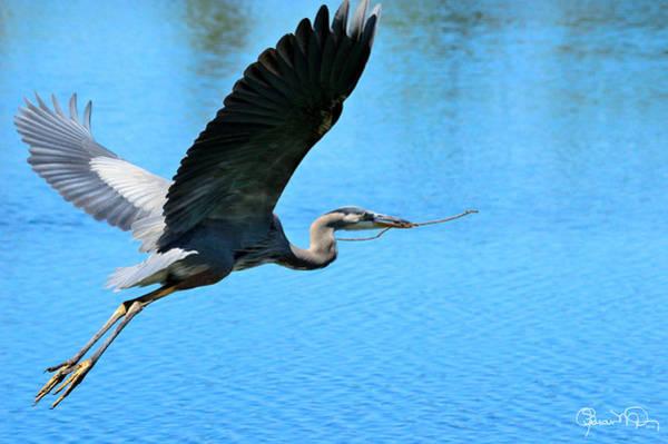 Photograph - Heron Bearing Gifts by Susan Molnar