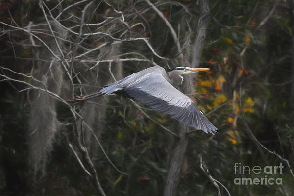 Painting - Heron Beauty And Grace by Deborah Benoit