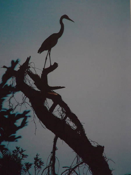 Great Blue Heron Mixed Media - Heron by Benjamin  Herndon