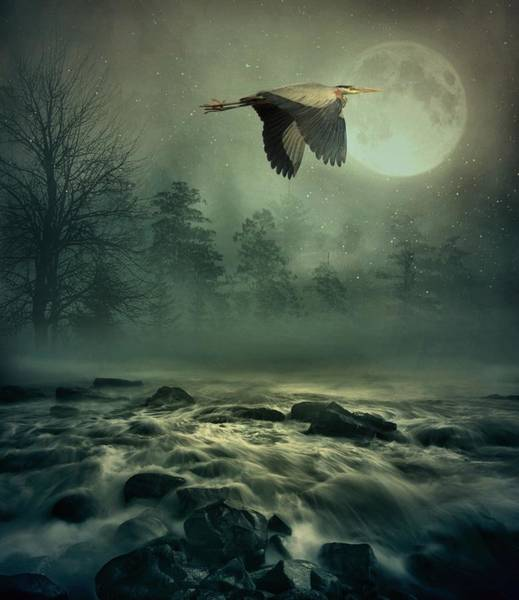 Art Print featuring the photograph Heron By Moonlight by Andrea Kollo