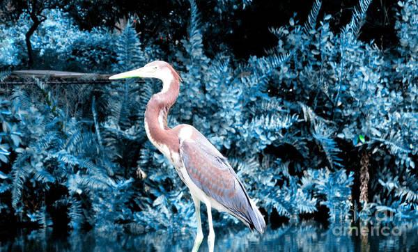 Photograph - Heron In Blue by Oksana Semenchenko