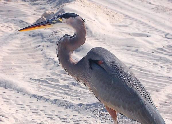 Digital Art - Heron In The Sand by Michael Thomas