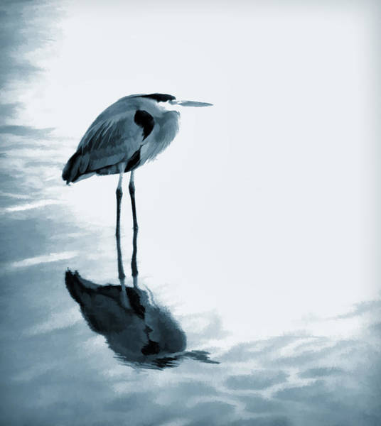 Great Blue Herons Photograph - Heron In The Shallows by Carol Leigh