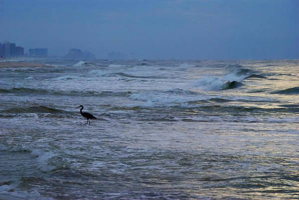 Digital Art - Heron In The Surf by Michael Thomas