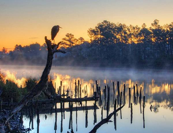 Digital Art - Heron On A Stick by Michael Thomas