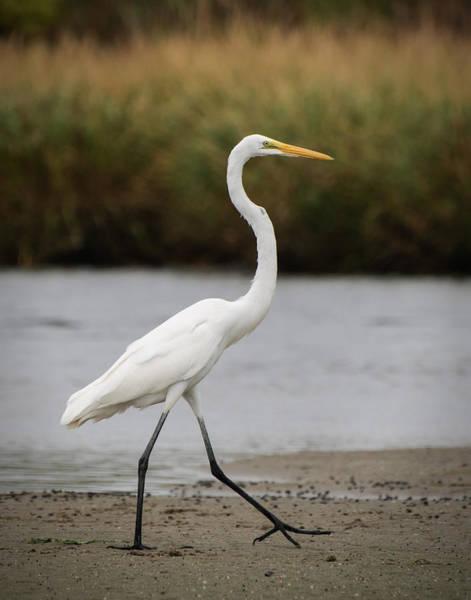 Photograph - Heron On A Stroll by Gary Slawsky