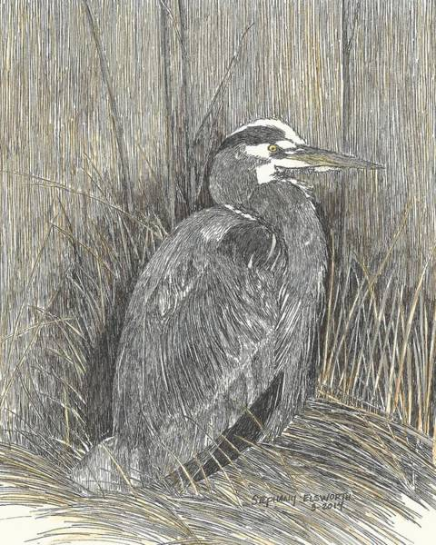Great Blue Heron Drawing - Heron On Assateague Island by Stephany Elsworth