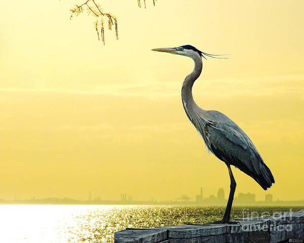 Digital Art - Heron On Mobile Bay At Fairhope Al by Lizi Beard-Ward
