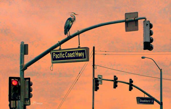 Wall Art - Photograph - Heron On Pch by Jennie Breeze