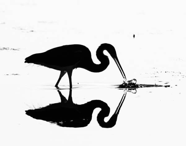 Photograph - Heron Silhouette by Brian Magnier