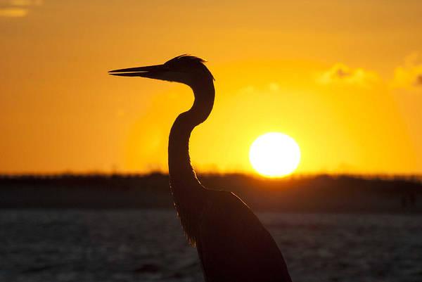 Digital Art - Heron Silhouette by Michael Thomas