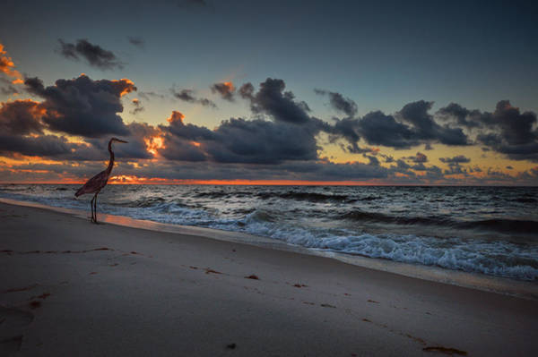Digital Art - Heron Sunrise by Michael Thomas