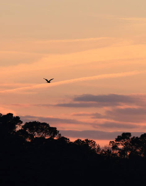 Photograph - Heron Sunset by Pete Federico