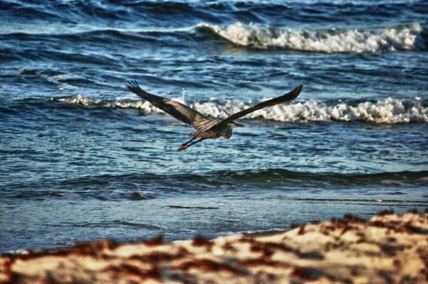 Digital Art - Heron Surf Cruising by Michael Thomas