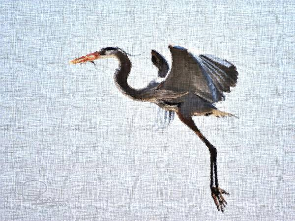 Photograph - Heron With Catch by Ludwig Keck