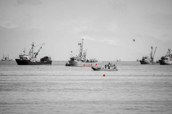 Photograph - Herring Season Georgia Strait by Roxy Hurtubise