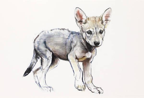 Pup Painting - Hesitating Arabian Wolf Pup by Mark Adlington