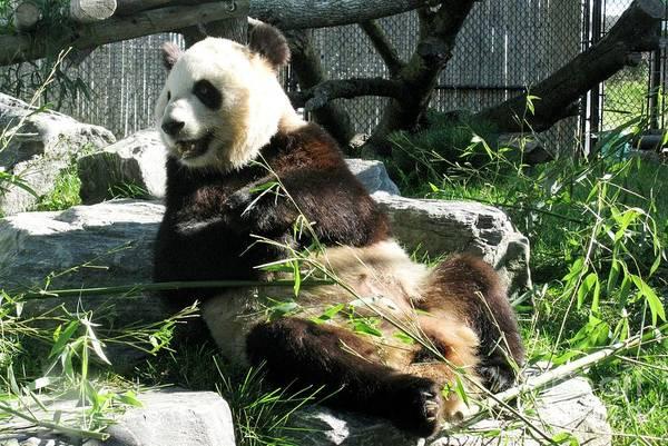 Wildlife Er Photograph - Hey Bro You Won't Believe What I Heard Yesterday... by Ausra Huntington nee Paulauskaite