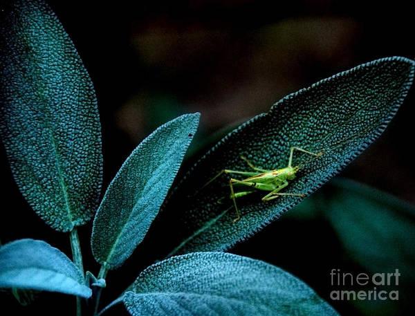 Photograph - Hey  I'm Trying To Hide by Debra Fedchin
