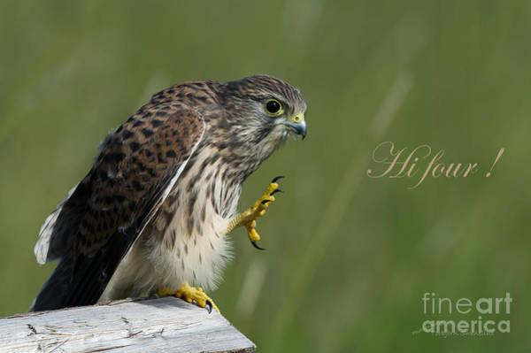 Photograph - Hi Four  by Torbjorn Swenelius