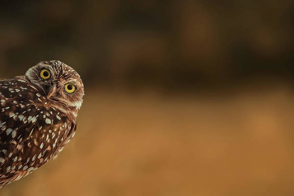 Curious Photograph - Hi There! by Marcus Hennen