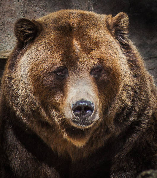 Denver Zoo Photograph - Hi There by Steven Reed