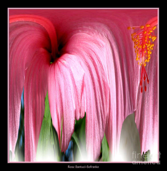 Photograph - Hibiscus Abstract 1 by Rose Santuci-Sofranko