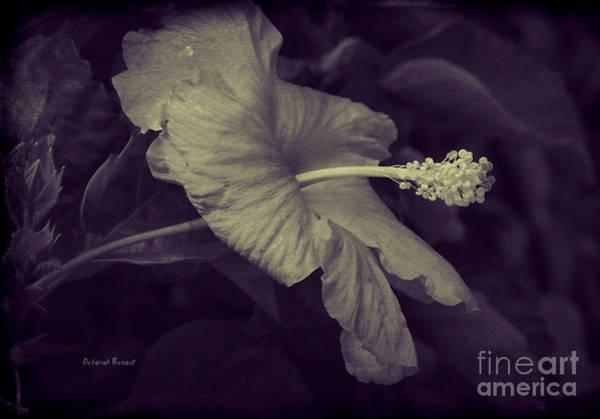 Photograph - Hibiscus At Midnight by Deborah Benoit