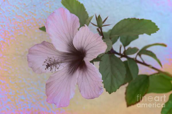 Photograph - Hibiscus by David Birchall