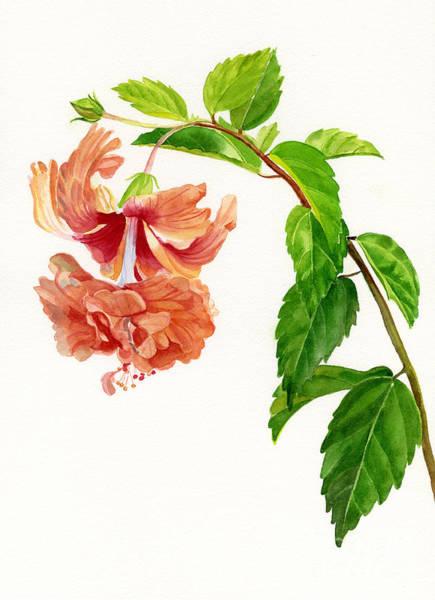 Hibiscus Flower Painting - Hibiscus El Capitolio Sport by Sharon Freeman
