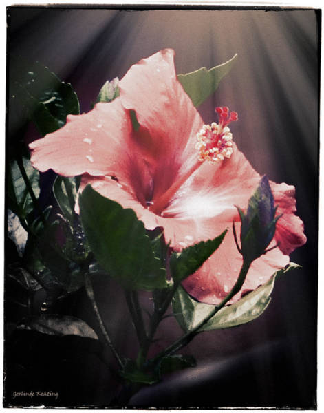 Photograph - Hibiscus Flower by Gerlinde Keating - Galleria GK Keating Associates Inc
