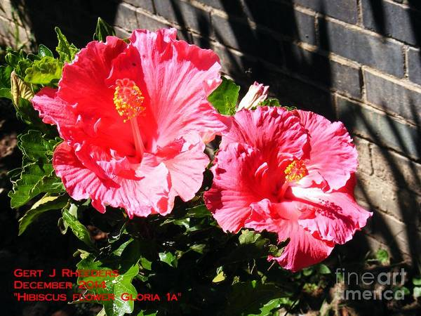 Special Offer Painting - Hibiscus Flower Gloria 1a by Gert J Rheeders