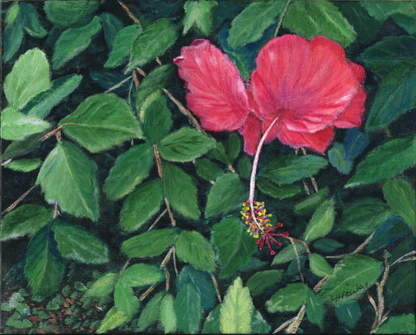 Painting - Hibiscus In Costa Rica by Linda Feinberg