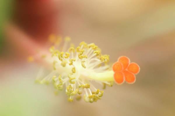 Hibiscus Reproductive Organ Art Print