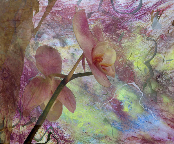 Bird Watercolor Mixed Media - Hidden Orchid by Donna Walsh