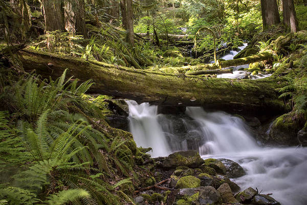 Ivanhoe Photograph - Hidden Stream by Todd Sarah Ivanhoe