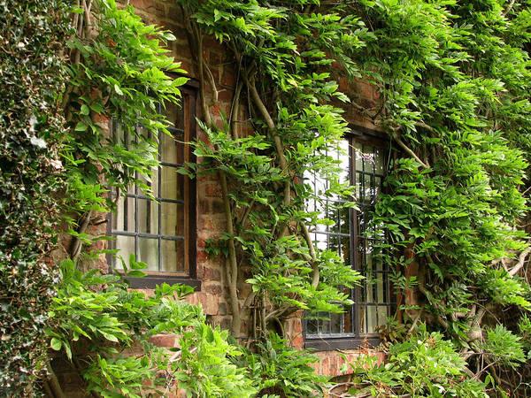 Photograph - Hidden Windows by Susan Leonard