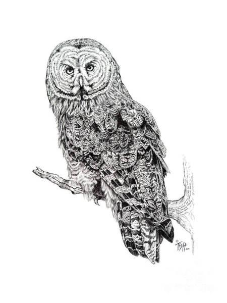 Drawing - Hidden Wisdom by Tish Wynne