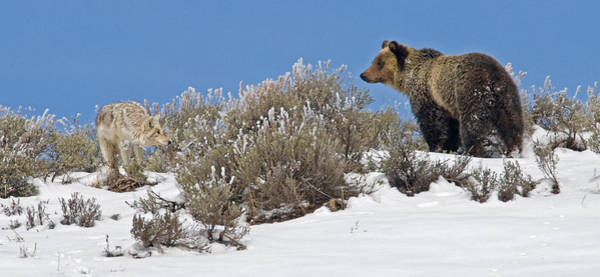 Grizzly Bears Photograph - Hide And Seek by Sandy Sisti