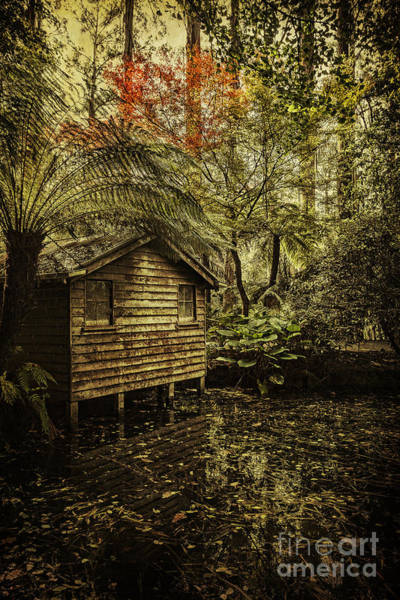 Wall Art - Photograph - Hideaway by Andrew Paranavitana
