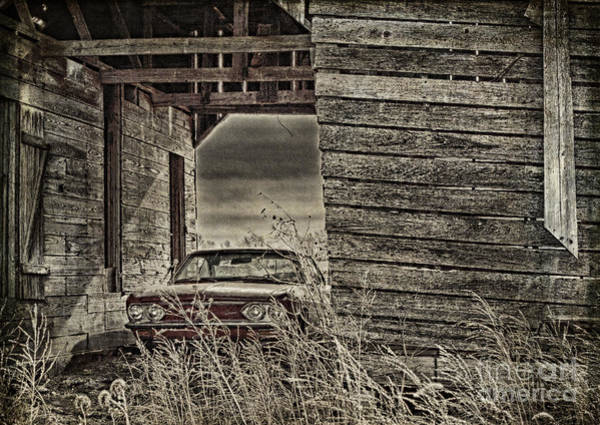 Photograph - Hiding In Plain Site by Pam  Holdsworth