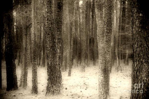 Photograph - Hiding In The Trees By Diana Sainz by Diana Raquel Sainz