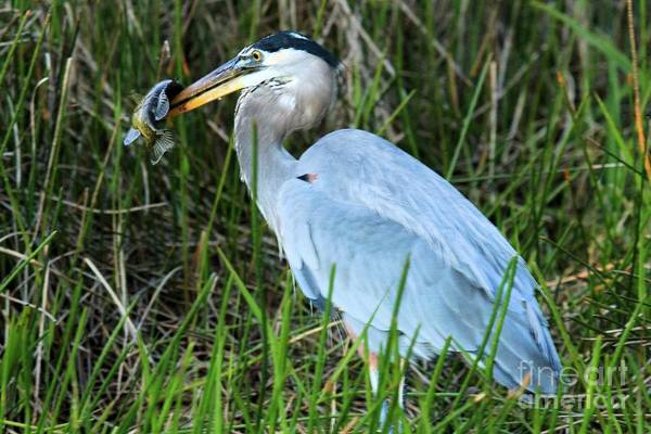 Photograph - Hiding The Catch by Adam Jewell