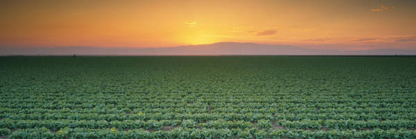 San Joaquin Valley Photograph - High Angle View Of A Lettuce Field by Panoramic Images